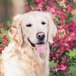 Фотосъемка собак