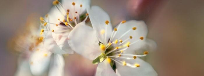 Фотосъемка цветов